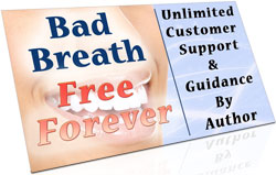 unlimited customer support & author-support