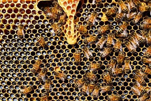 secrets-of-manuka-honey