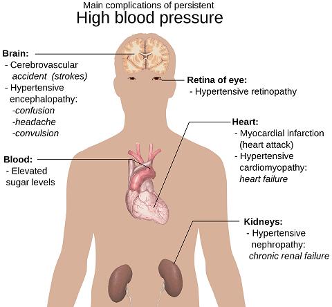 blue heron blood pressure reviews